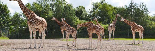 Jutland: Givskud Zoo met kinderen bezoeken