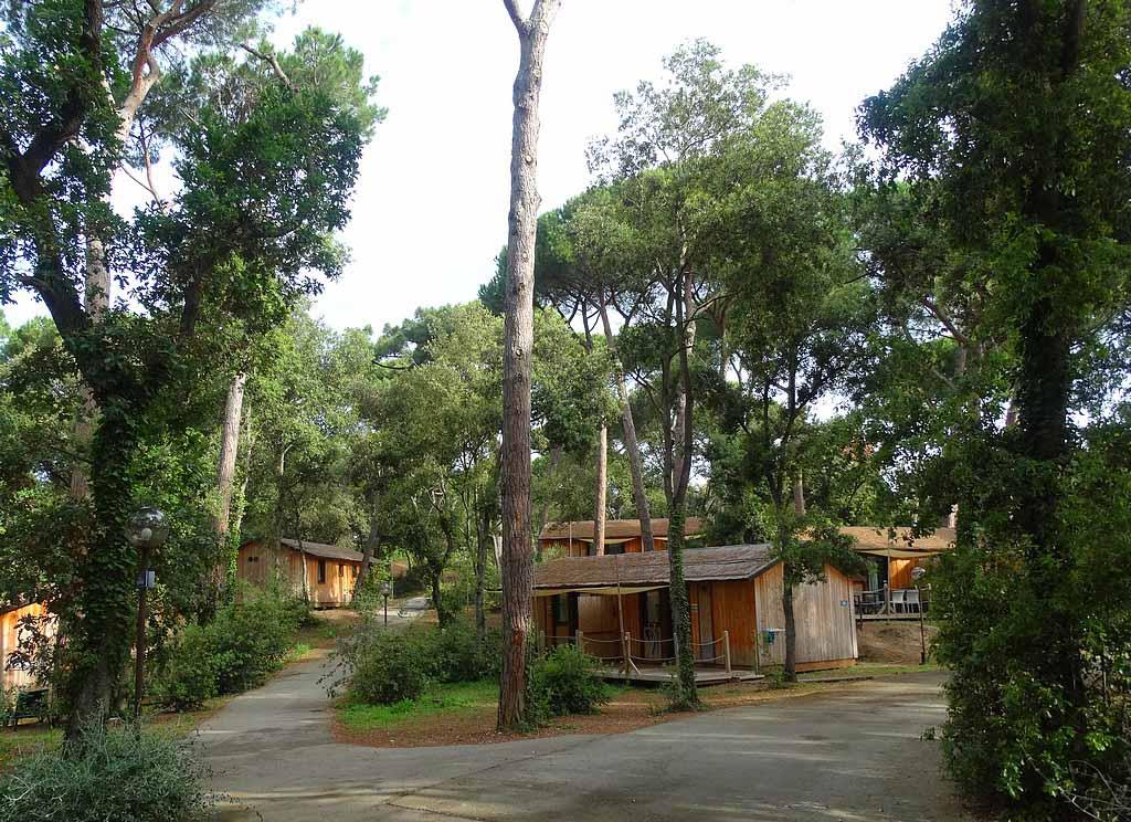Het park heeft een natuurlijke uitstraling dat versterkt wordt door de houten chalets.