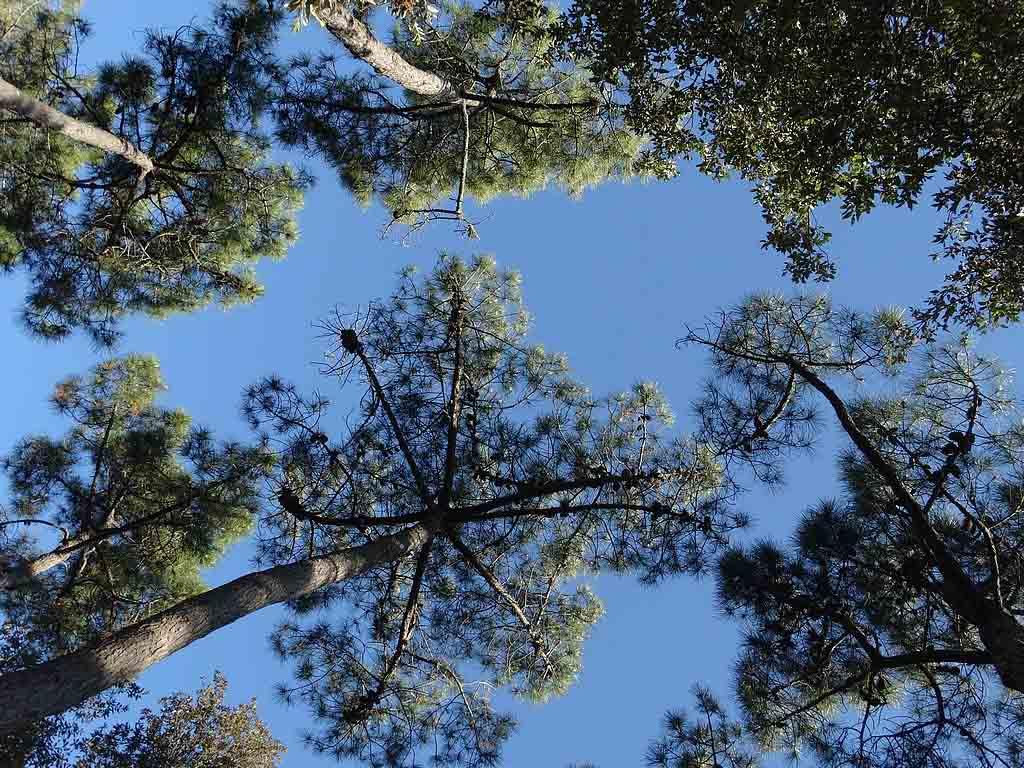 Zeker in de zomer is het fijn dat de hoge bomen voor schaduw zorgen.