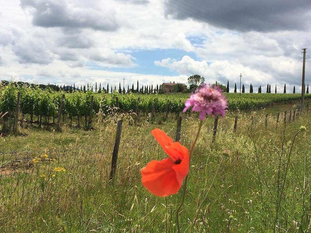 Prachtig Toscane...