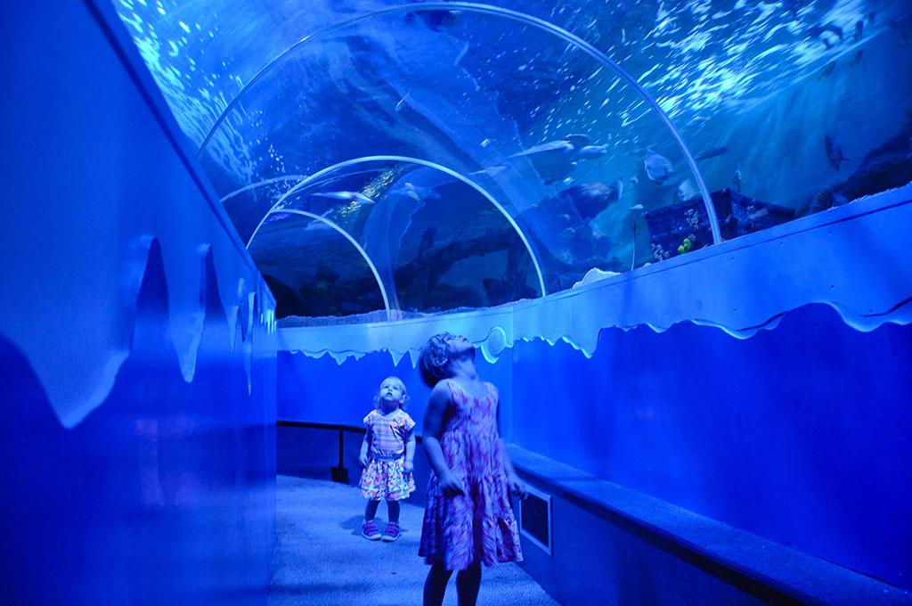 Samen in de onderwatertunnel loeren naar de vissen.