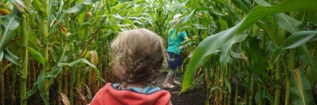 Eropuit in Noordoost-Friesland met kinderen: De Kruidhof en Frytsjam
