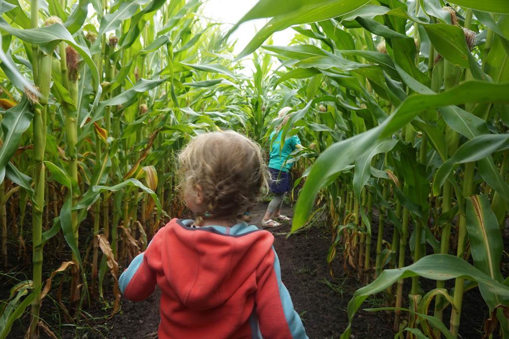 We dolen rond in het maïsdoolhof, heerlijk eropuit in Noordoost-Friesland