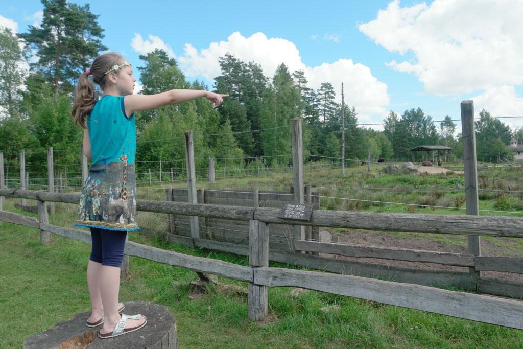 Kijk, daar bizons en ik zie ook een eend!