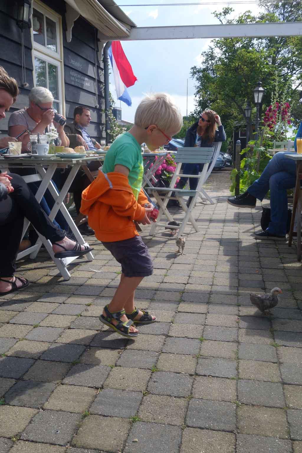 Op het terras scharrelen de kuikens rond.
