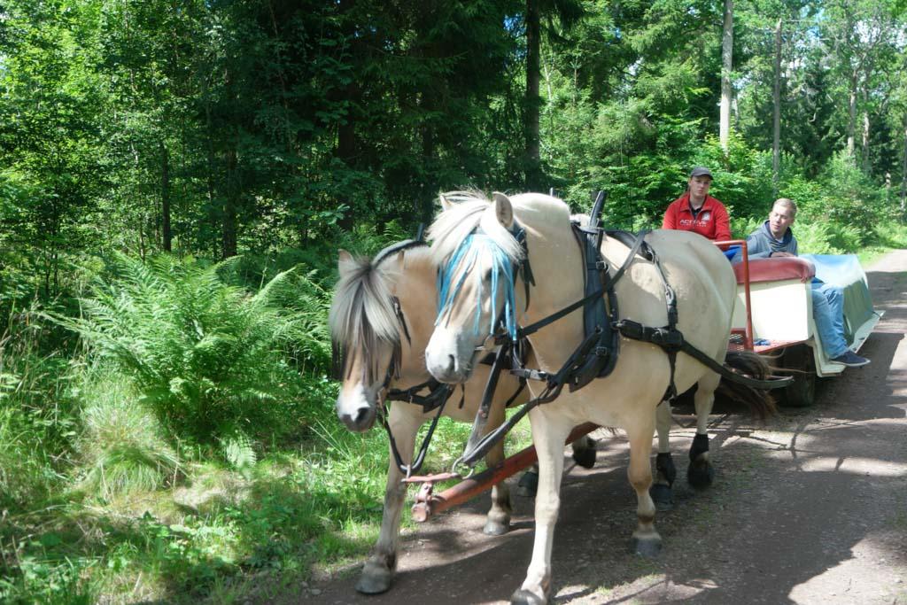 Met paard en wagen.