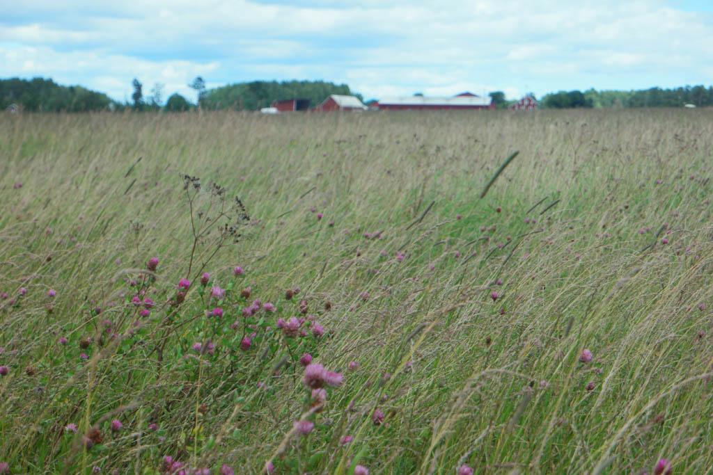 De paarse bloemetjes zorgen voor een lieflijke uitstraling.
