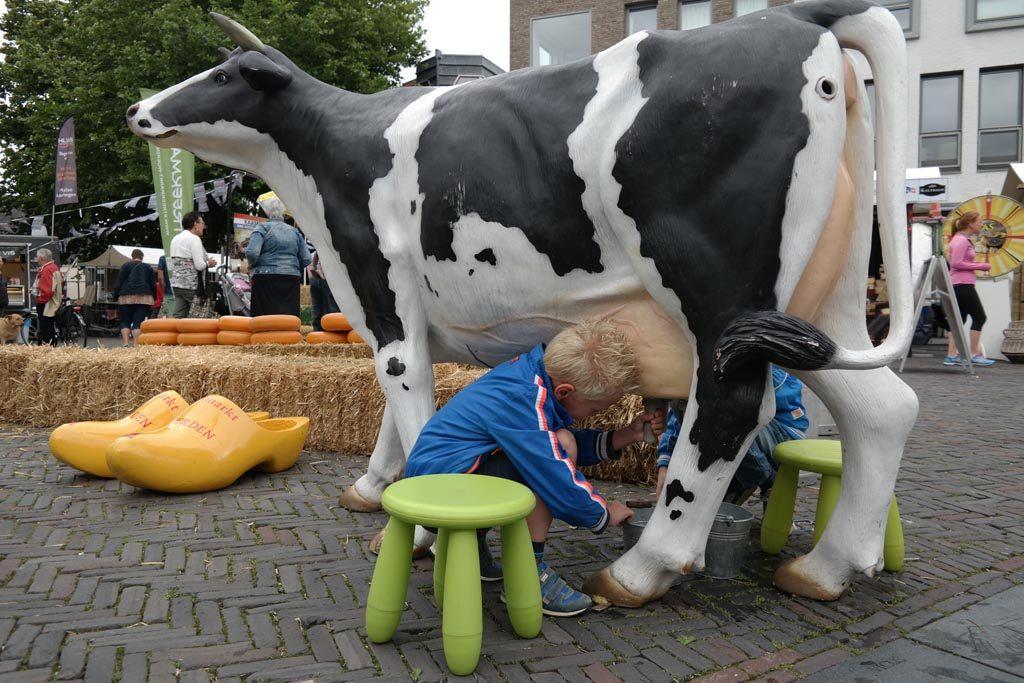 Een koe melken tijdens de kaasmarkt.