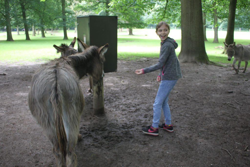 De ezels weten precies waar het voer vandaan komt.