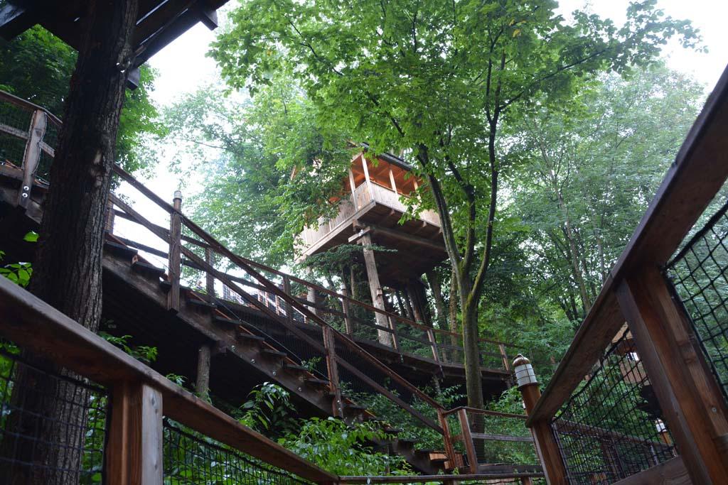 De hoogste boomhut van het resort is voor ons.