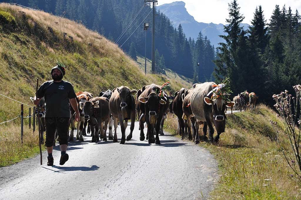 Een trotse eigenaar met zijn kudde tijdens de Alpabtrieb in Oostenrijk.