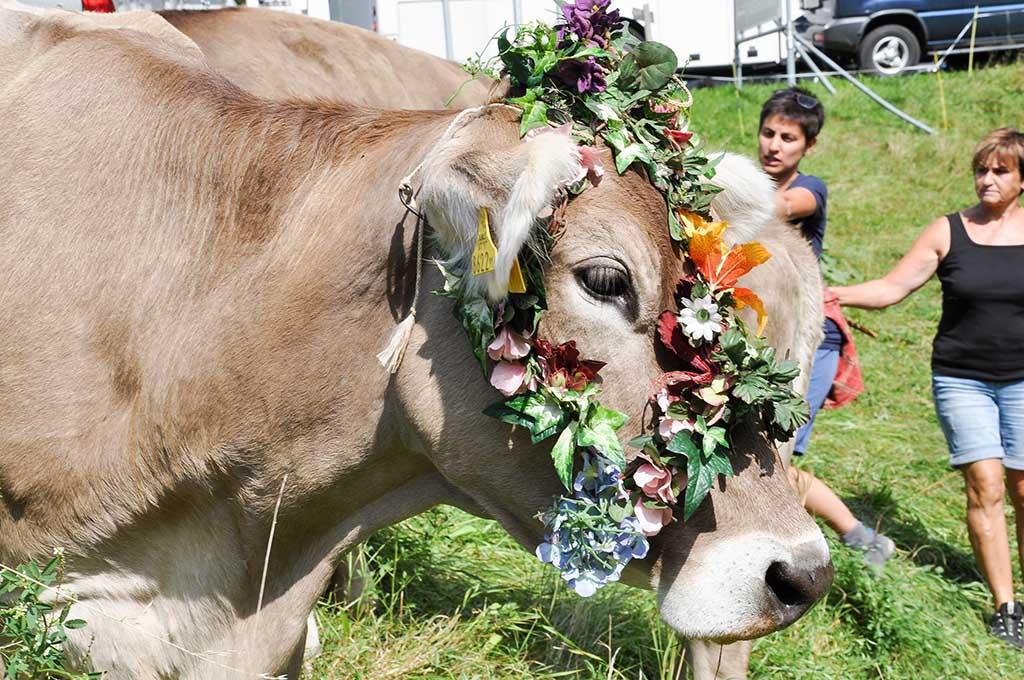 Nog een prachtig versierde koe.