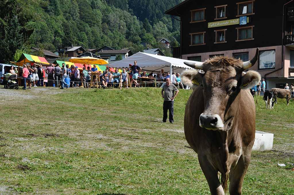 Nieuwsgierige koe op de markt.