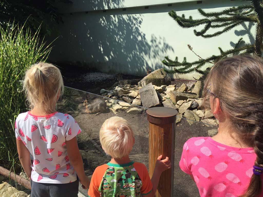 Altijd goed bij kinderen, zo'n bezoek aan de dierentuin.