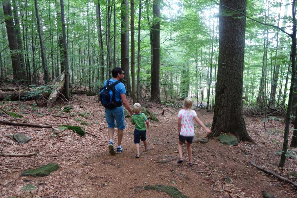 We wandelen door het bos naar beneden.