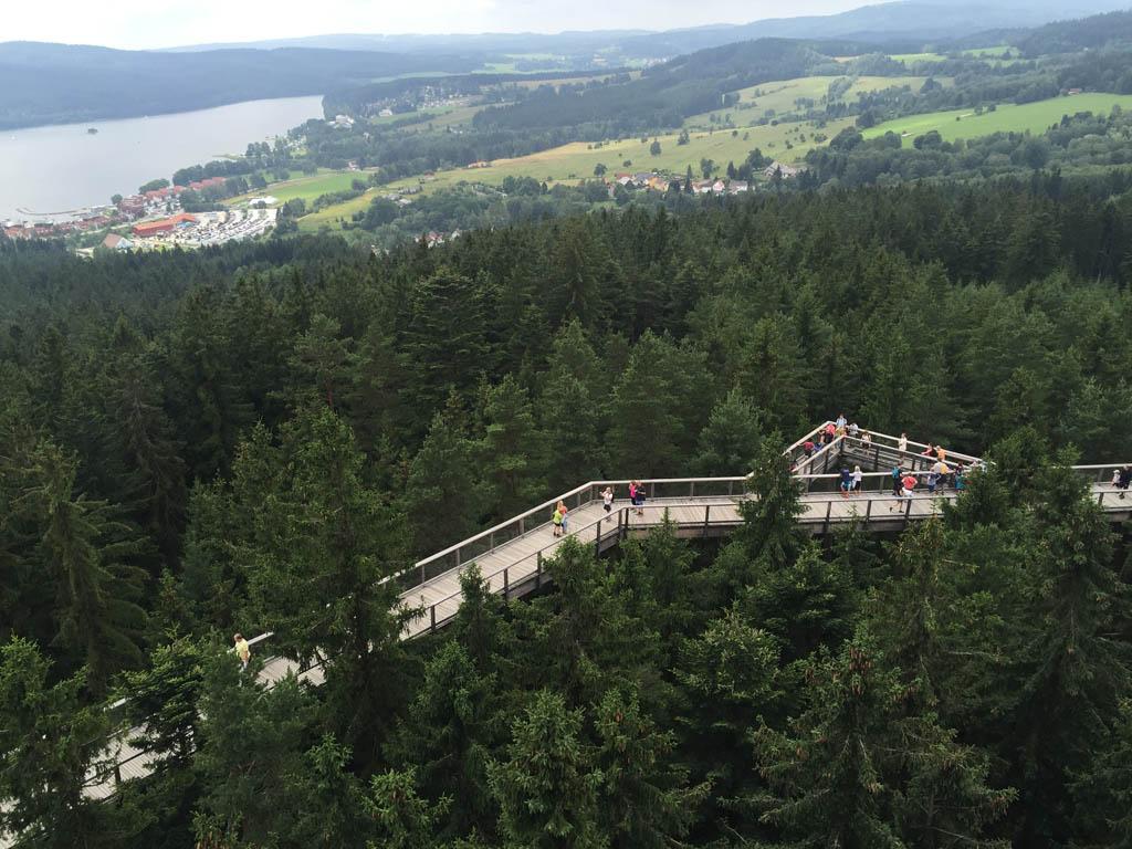 Het boomkroonpad ligt in de bossen vlakbij het Lipnomeer.