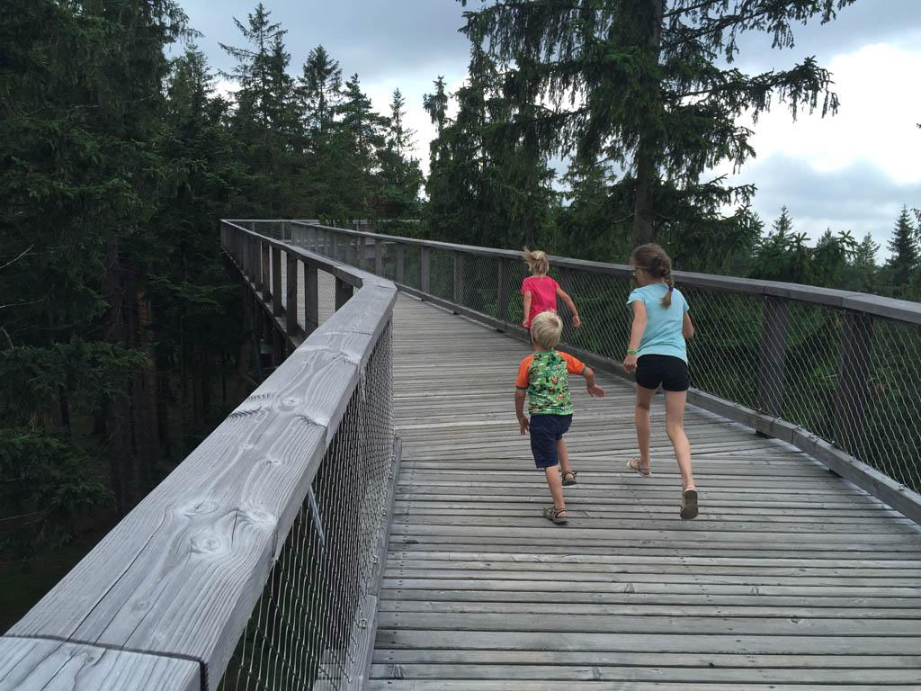 De kinderen vinden het prachtig om door de toppen te lopen.
