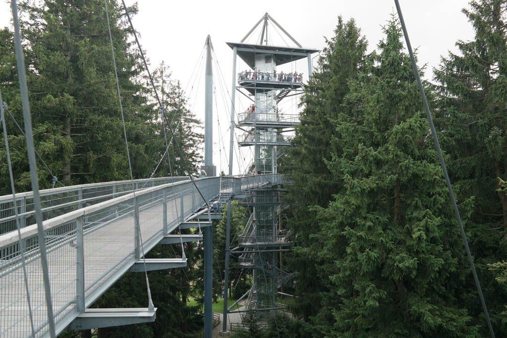 Via het boomkroonpad naar de uitzichttoren.