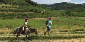 Brda: wandelen met een ezel en bezienswaardigheden