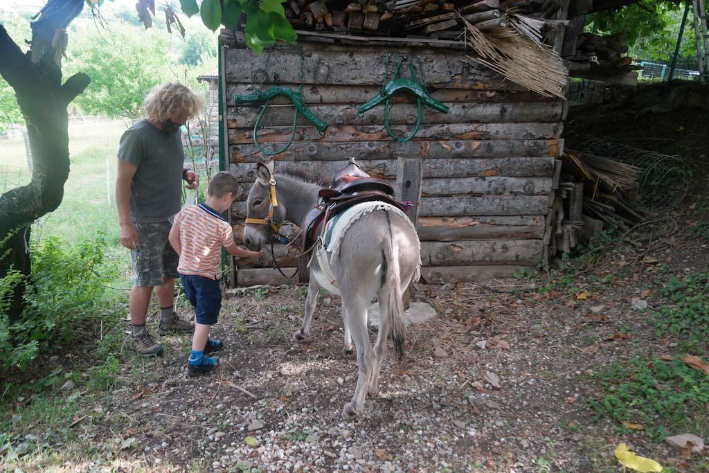 Kennismaken met de ezel.