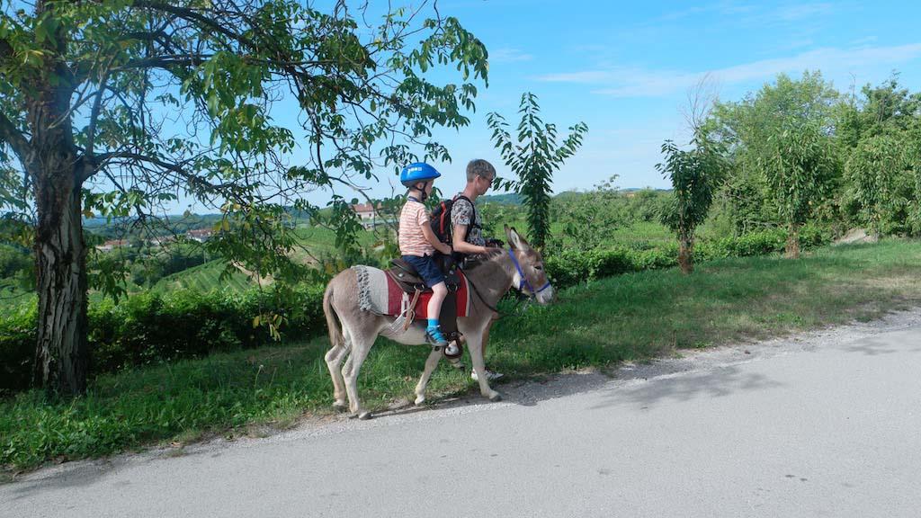 Een deel van onze route gaat over een weg waar ook auto's rijden. Alle passanten remmen keurig af als ze ons zien met de ezels.