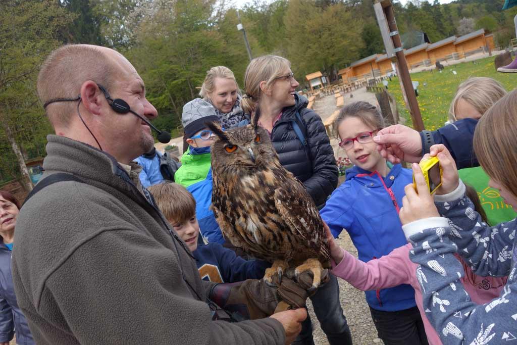 De kinderen mogen een uil aaien tijdens de roofvogelshow.