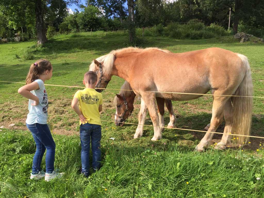 Elke dag kijken de kinderen bij de paarden.