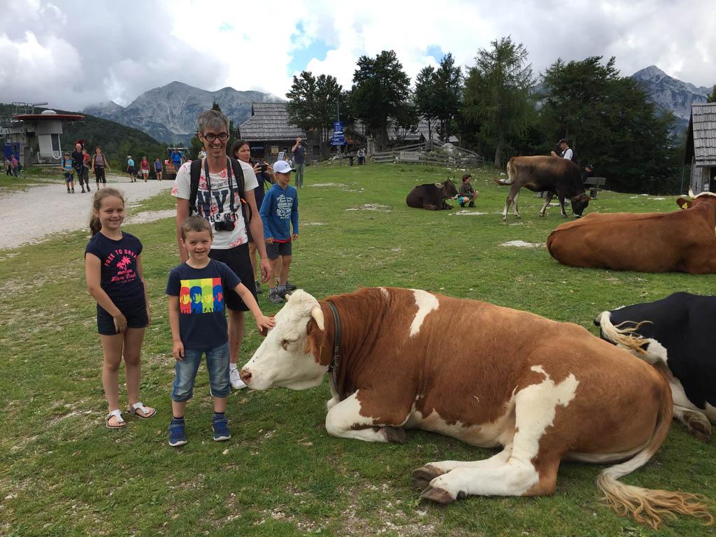 Het echte alpengevoel dankzij de koeien.