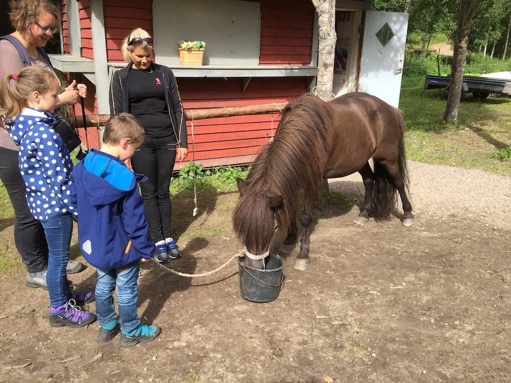 Na afloop van onze wandeling mogen we de pony eten geven.