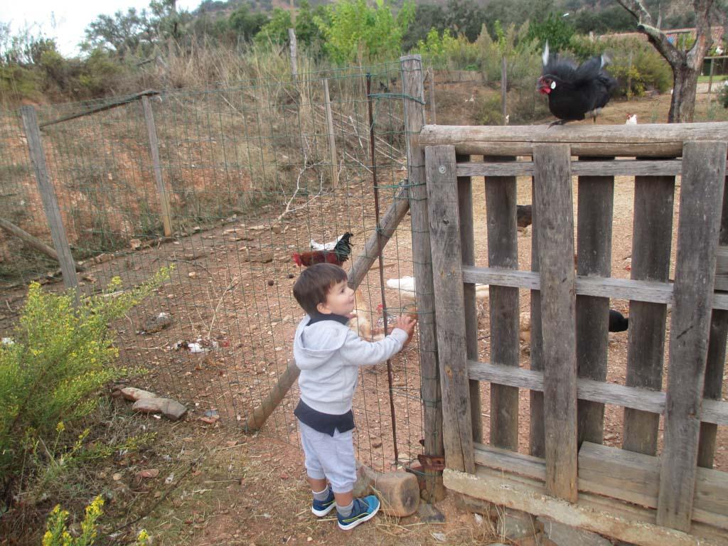 Elke ochtend de kippen voeren.