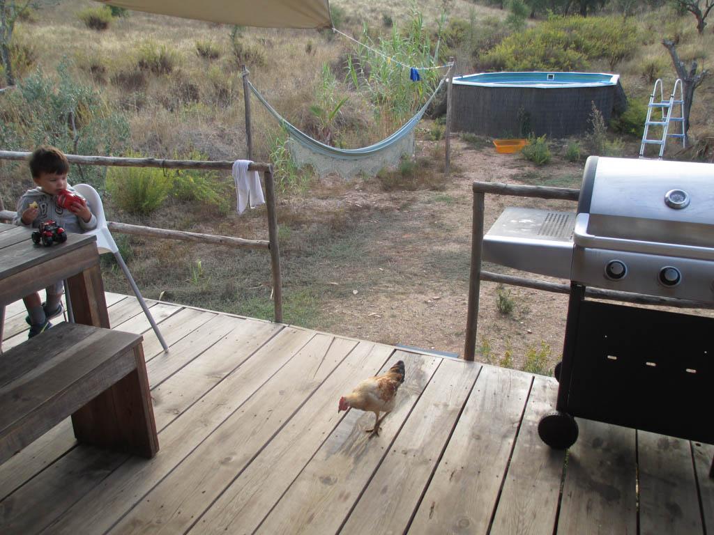 Bij de Serengeti Lodge lopen de kippen om je heen.