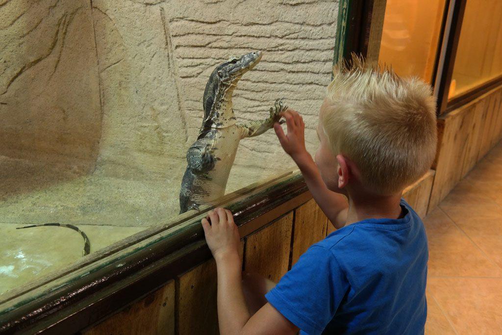 Contact met de dieren in Alligator Bay.