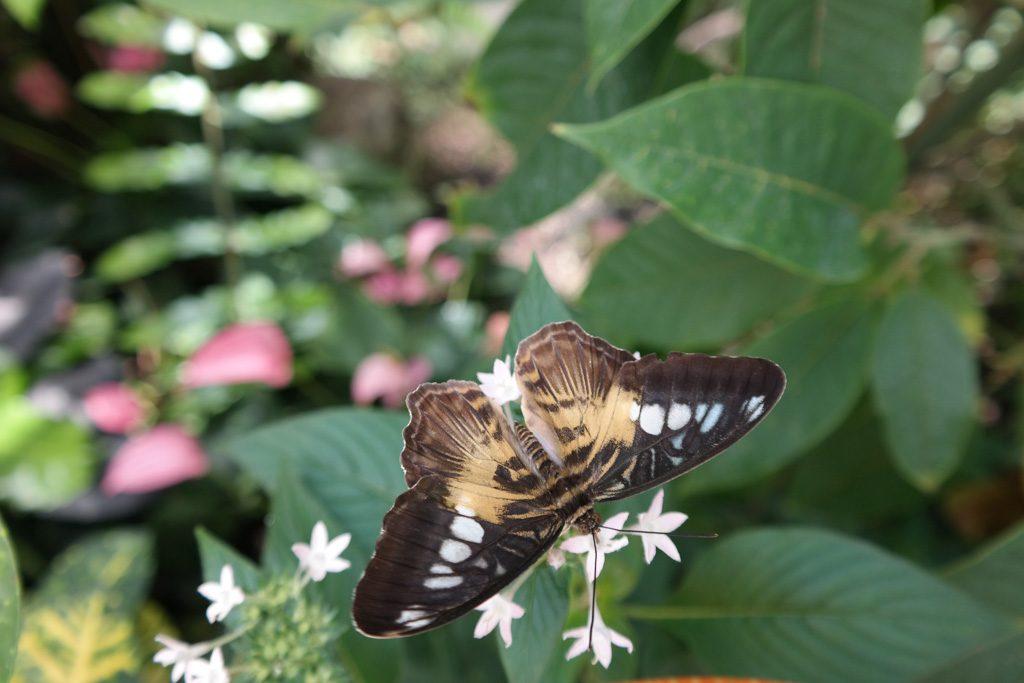 In de vlindertuin van Mainau.