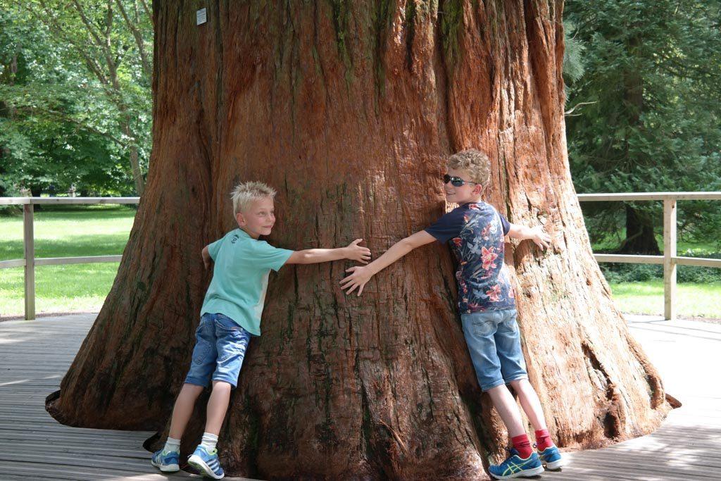 Er staan overal eeuwenoude dikke bomen.