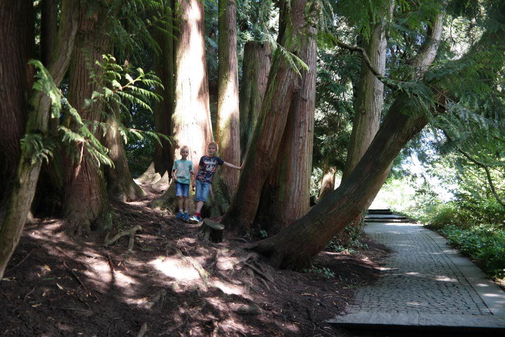 En bijzondere (veelstammige) bomen.