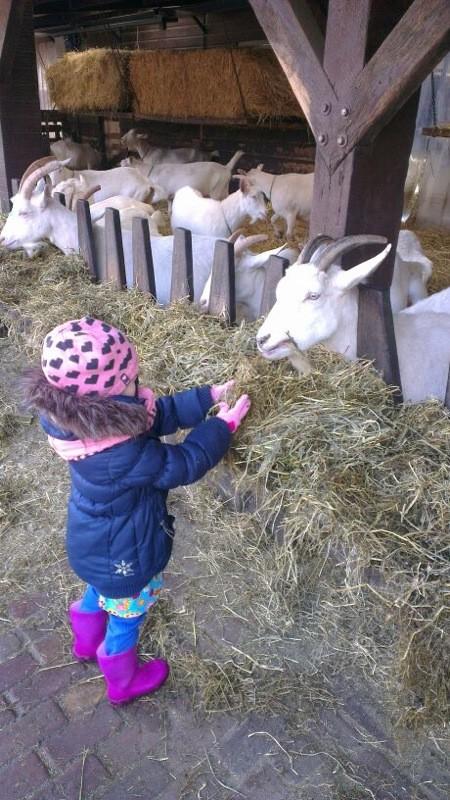 Bij de Geitenboerderij.