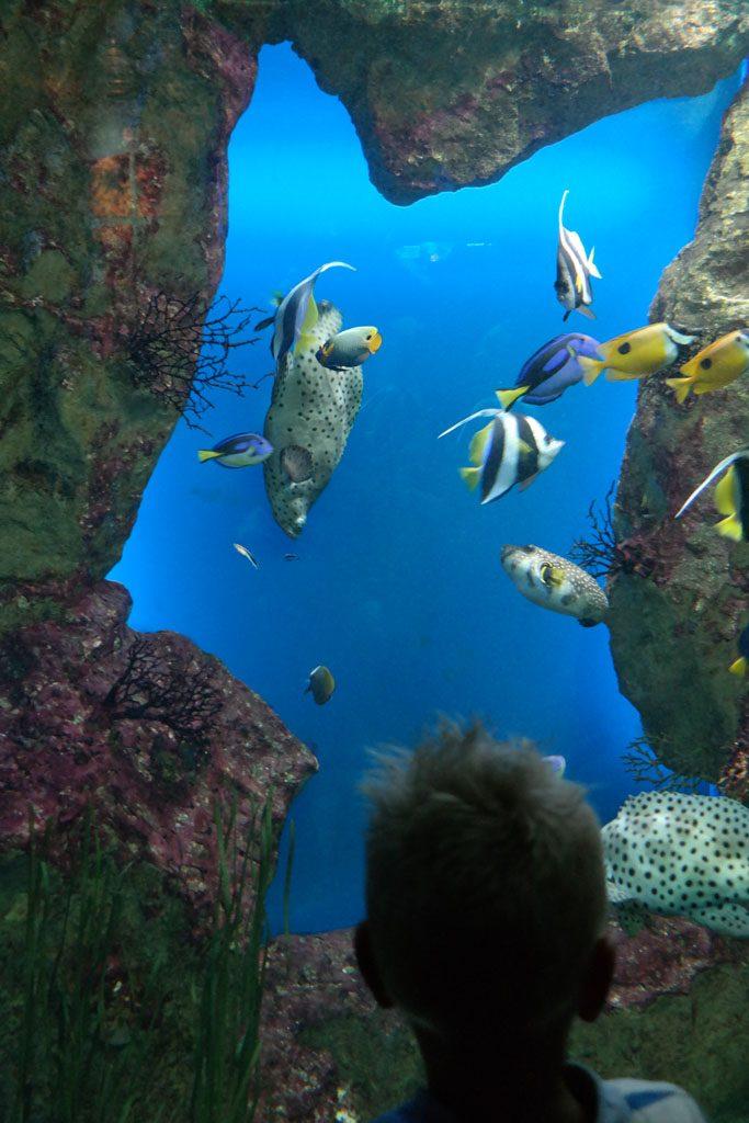 Prachtige (tropische) aquaria in het Grand aquarium de Saint Malo.