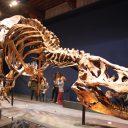 Met de trein naar Trix de T. rex in Naturalis