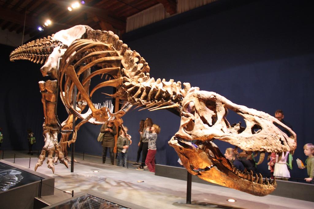 Trix de T. rex in Naturalis
