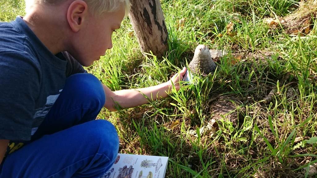 IVN Scharrelkids paddenstoelenwandelingen op een mooie herfstdag (foto: Suzanne).