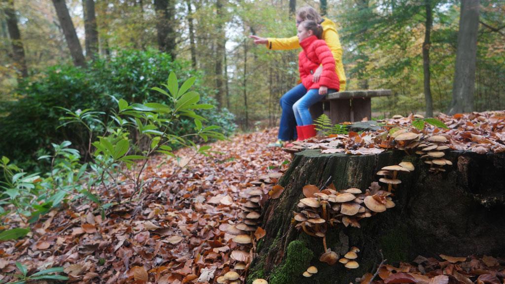 Paddenstoelen op een oude boomstronk.