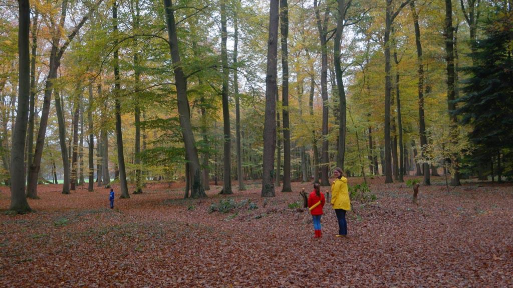 Het laatste beetje herfst. De bladeren liggen vooral op de grond.