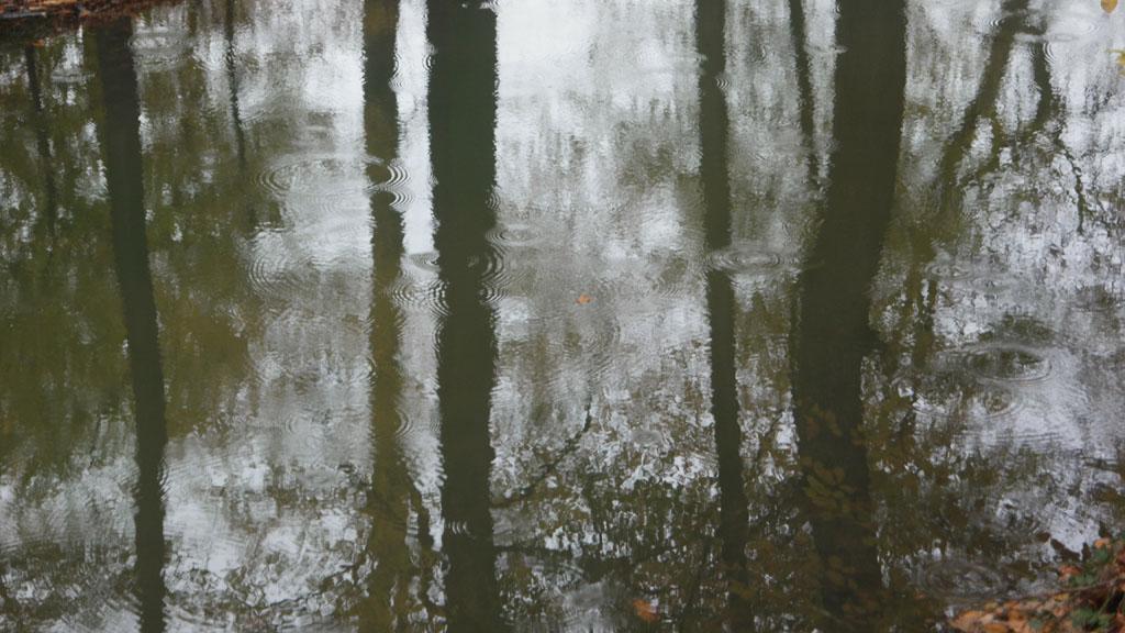 Het regende eventjes tijdens onze wandeling.
