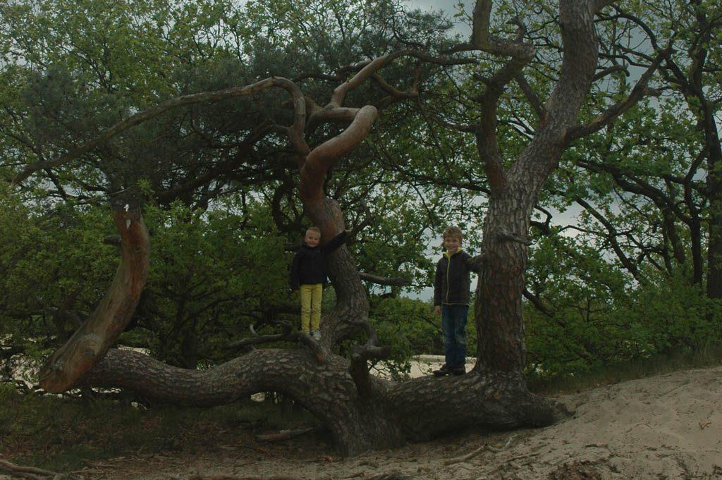 Superleuke klimboom onderweg langs de route.