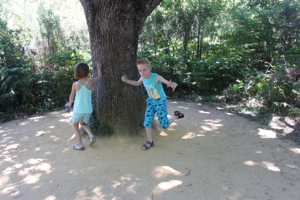 Dansen om de boom voor moeder aarde.