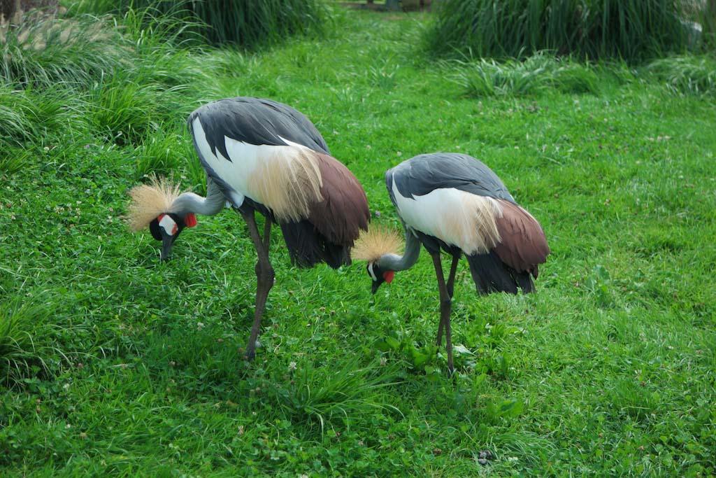 Mooie vogels.