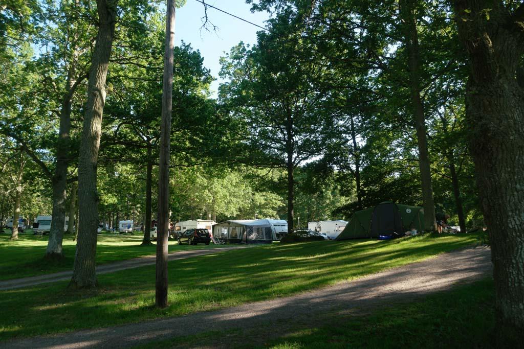 De kampeerplekken liggen tussen de bomen.
