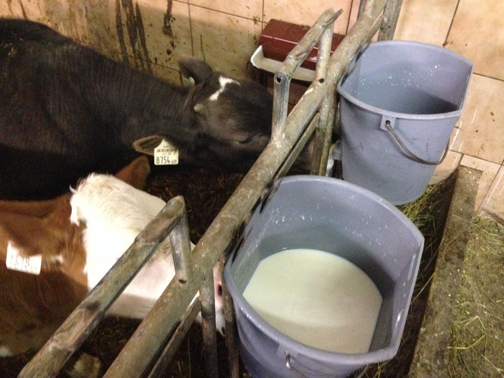 De kalfjes krijgen melk.