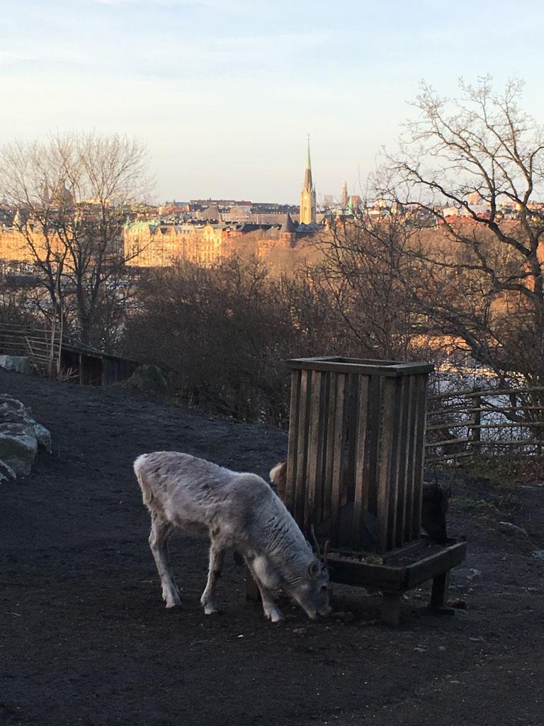 De herten in Skansen en het uitzicht op de achtergrond.