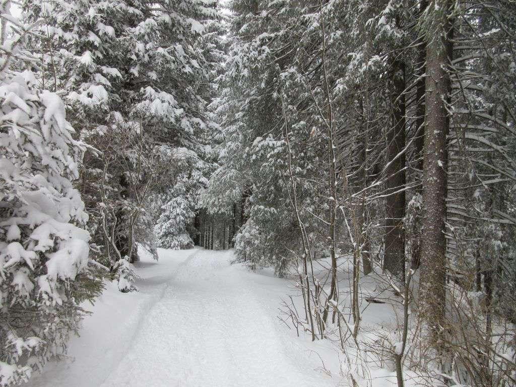 De bomen zijn zo prachtig met al die sneeuw